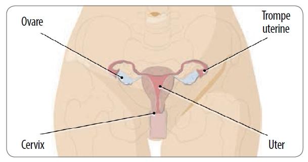 simptomele de organe pelvine mici